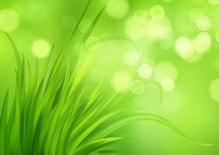 Frash Spring green grass background. Vector illustration EPS10 일러스트