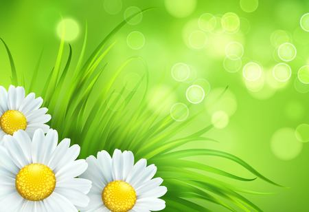 Frash Spring green grass and chamomile background. Vector illustration EPS10