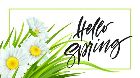 Spring background with daisies and fresh green grass. Hello Spring handwriting Lettering. Vector illustration EPS10