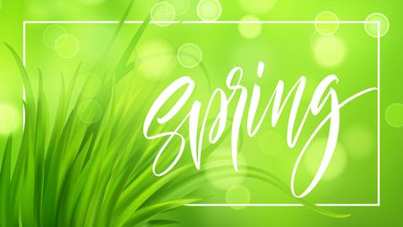 Frash Spring green grass background with handwriting lettering. Vector illustration EPS10