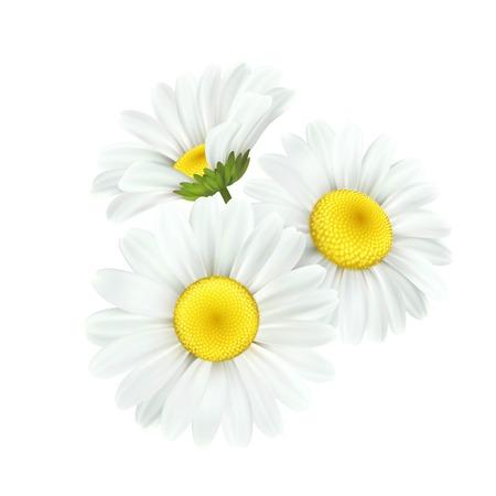 Fiore della margherita della camomilla isolato su priorità bassa bianca. Illustrazione vettoriale Eps10 Vettoriali