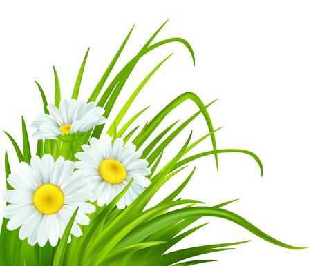 Spring background with daisies and fresh green grass. Vector illustration EPS10