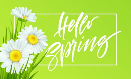 Spring background with daisies and fresh green grass. Hello Spring handwriting Lettering. Vector illustration EPS10 Stock fotó - 116149020