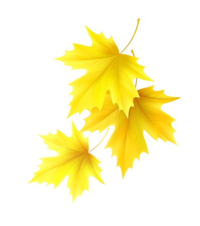Autumn background with yellow maple leaf leaves. Vector illustration