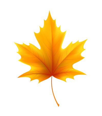 Autumn yellow maple leaf leaves. Vector illustration EPS10