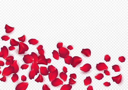 Sfondo di petali di rosa isolato su uno sfondo bianco trasparente. Sfondo di San Valentino. Illustrazione vettoriale Eps10