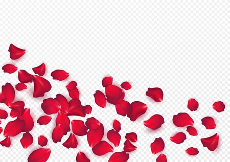 Telón de fondo de pétalos de rosa aislado sobre un fondo blanco transparente. Fondo del día de San Valentín. Ilustración de vector EPS10