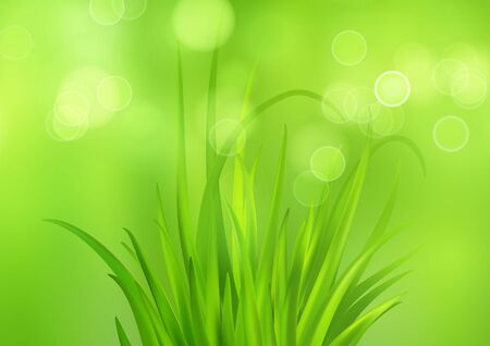 Spring bright green background with fresh spring grass. Blur and bokeh effect. Vector illustration