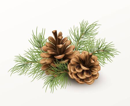 Pine cone with a branch of spruce needles isolated on a white background. Realistic vector illustration EPS10