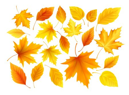 Set of realistic autumn yellow, red, orange leaves isolated on a white background. Vector illustration Vettoriali