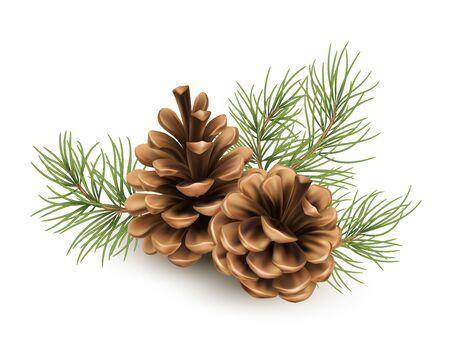 Pine cone with a branch of spruce needles isolated on a white background. Realistic vector illustration