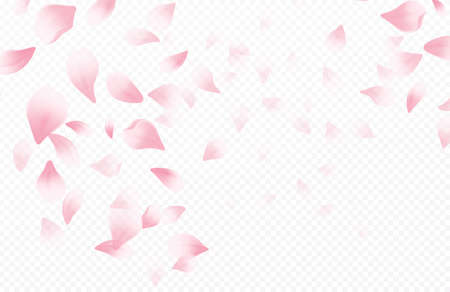 Spring time beautiful background with spring blooming cherry blossoms. Sakura flying petals isolated on white background. Vector illustration