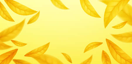 Falling flying autumn leaves background. Realistic autumn yellow leaf isolated on yellow background. Fall sale background. Vector illustration EPS10 向量圖像