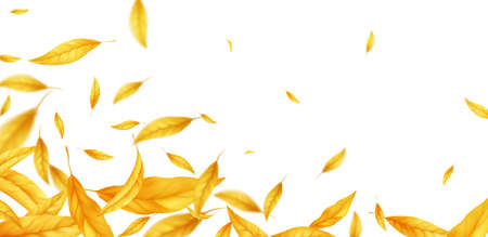 Falling flying autumn leaves background. Realistic autumn yellow leaf isolated on white background. Fall sale background. Vector illustration
