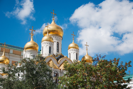 Golden domes and crosses of the Annunciation Cathedral of the Orthodox Church, located on the Cathedral Square of the Moscow Kremlin with rowan and birch in the foreground