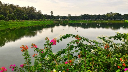 A lake in the outskirts of Chennai, India