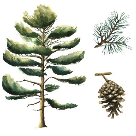 松の木の水彩画。