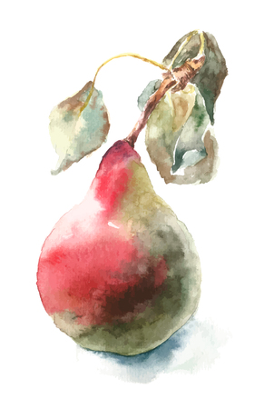 vintage drawing: Watercolor pear. Yand drawn illustration pear with  handle and leaves isolated on white background.