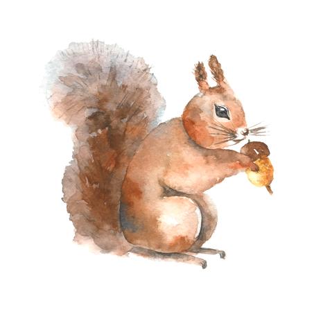 Watercolor eekhoorn. Hand getrokken geïsoleerde eekhoorn met een moer op een witte achtergrond.