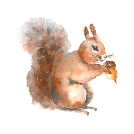 Watercolor squirrel. Hand drawn isolated squirrel with a nut on white background. Stock Photo