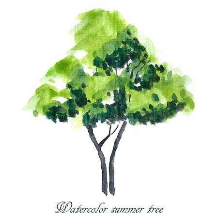 Summer tree. Summer background. Watercolor illustration. Vettoriali