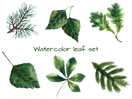Set of watercolor leaves: pine, chestnut, oak, beech, poplar, fir brunch.  Vector illustration