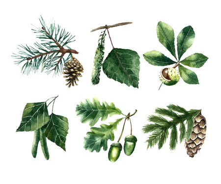 Set of watercolor leaves: pine, chestnut, oak, beech, poplar, fir brunch.