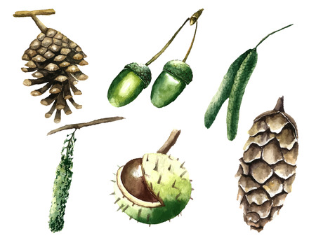 pine cones: Watercolor set of elements of trees. Vector illustration.