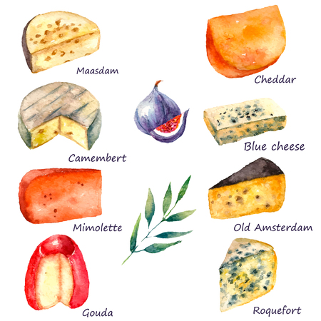camembert: Cheese making various types of cheese set of watercolor illustration on a white background with green twig and figs. Vector.