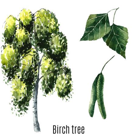 Birch tree watercolor. Vector illustration.