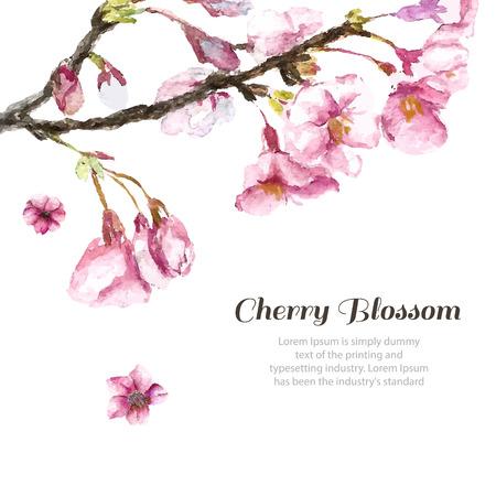 arbol de pascua: Flor de cerezo de la acuarela. Empate a mano flor de cerezo rama de sakura y flores. Ilustraciones del vector.