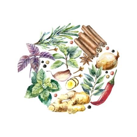 Aquarel kruiden en specerijen frame. Ronde frame met de hand geschilderd voedsel voorwerpen: munt, basilicum, rozemarijn, peterselie, oregano, tijm, laurier, groene ui, gember, peper, vanille. Stockfoto - 46276087