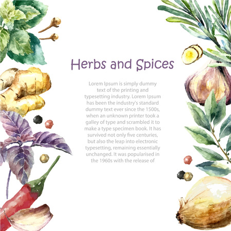 Watercolor herbs and spices frame. Hand painted food objects: mint, basil, rosemary, parsley, oregano, thyme, bay leaves, green onion, ginger, pepper, vanilla. Ilustração