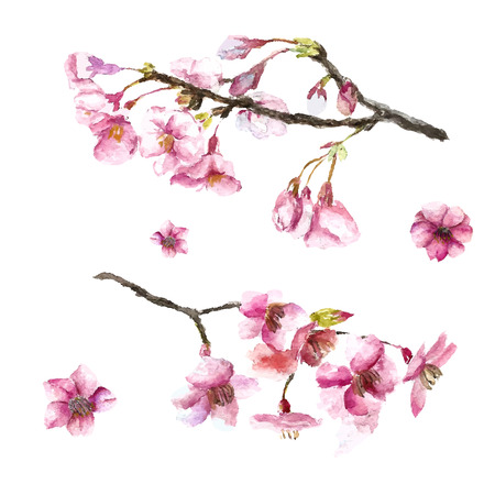 summer in japan: Watercolor cherry blossom. Hand draw cherry blossom sakura branch and flowers. Vector illustrations. Illustration