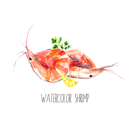 seafood salad: Watercolor shrimps with parsley and lemon.Hand draw isolated illustration on white background. Fresh organic food.