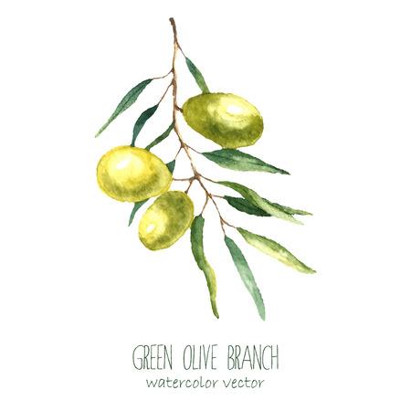 白い背景の水彩画のグリーン オリーブの枝。テキスト手描かれた分離自然ベクター オブジェクトです。健康と自然のカード デザイン 写真素材 - 46276568