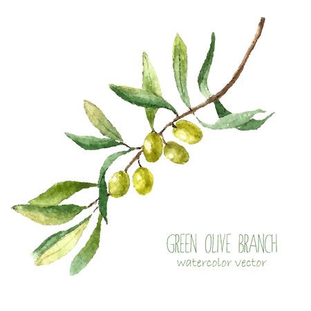 흰색 배경에 수채화 녹색 올리브 가지. 손 텍스트에 대 한 장소와 격리 된 자연 벡터 개체를 그려. 건강과 자연 카드 디자인 일러스트