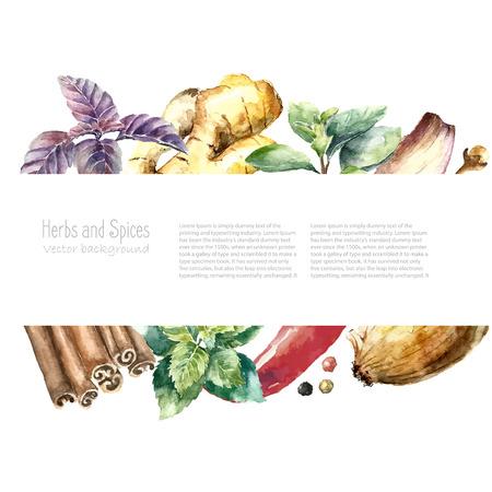 水彩のハーブやスパイスのフレーム。手描きの料理のオブジェクト: ミント、バジル、ローズマリー、パセリ、オレガノ、タイム、月桂樹の葉、ネギ  イラスト・ベクター素材