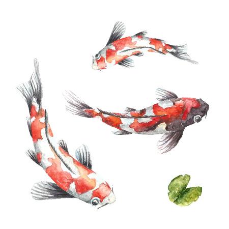 Waterverf het rode koikarpers. Geïsoleerde hand te trekken vissen. Vector illustraties. Stockfoto