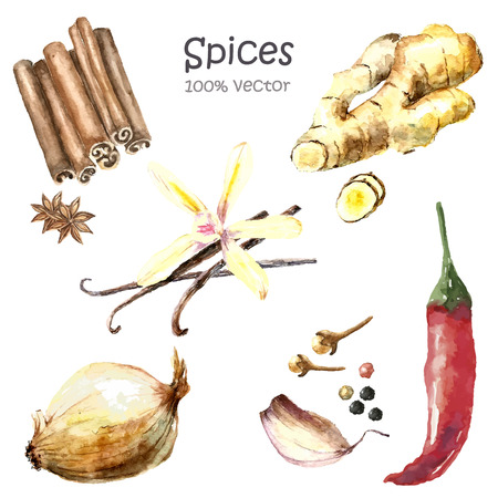 Watercolor collection of spices isolated: cinnamon and anise, ginger root, vanilla, garlic, black and red pepper, onion, cloves.  Hand draw illustration.