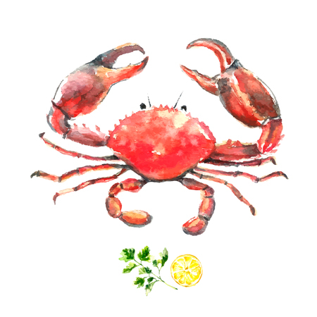 pinching: Watercolor crab.Hand draw isolated illustration on white background. Fresh organic food.