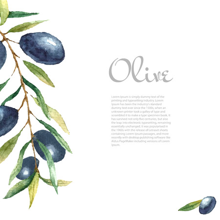 Watercolor black olive branch on white background . Hand drawn isolated natural vector object with place for text. Healthy and natural card design