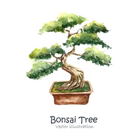 zen garden: Watercolor Tree Bonsai. Hand draw japanese tree. Vector illustrations. Stock Photo