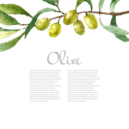 olive: Watercolor green olive branch on white background . Hand drawn isolated natural vector object with place for text. Healthy and natural card design