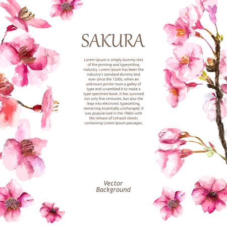 수채화 벚꽃. 손으로 그리는 벚꽃 사쿠라 분기 및 꽃. 벡터 일러스트.