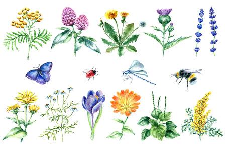 Main aquarelle illustration botanique dessinée. Plantes médicinales dessin isolé sur le fond blanc. Plantes médicinales illustration, herbarium.vector
