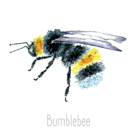 Hand draw watercolor Bumblebees In Flight Hand Painted. Set isolated on white background.vector Ilustração