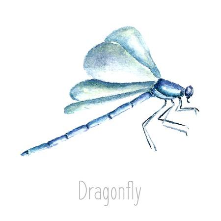 schmetterlinge blau wasserfarbe: Hand gezeichnet Aquarell Libelle Illustration. Zeichnung auf dem weißen Hintergrund. Dragonfly illustration.vector