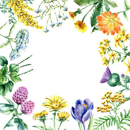 手描き水彩画ボタニカル イラストです。メディカル ハーブを描く白い背景上に分離。メディカル ハーブの図、標本館 banner.vector  イラスト・ベクター素材