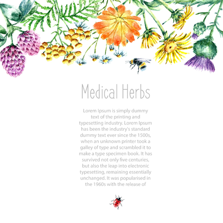 Hand drawn watercolor botanical illustration. Medical herbs drawing isolated on the white background. Medical herbs illustration, herbarium banner.vector